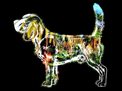 Hank aka Beagle Juice - 6 hank dog photography beagle tshirt key west