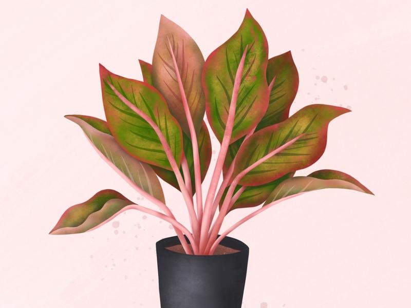 Algaonema ipad pro procreate plant illustration