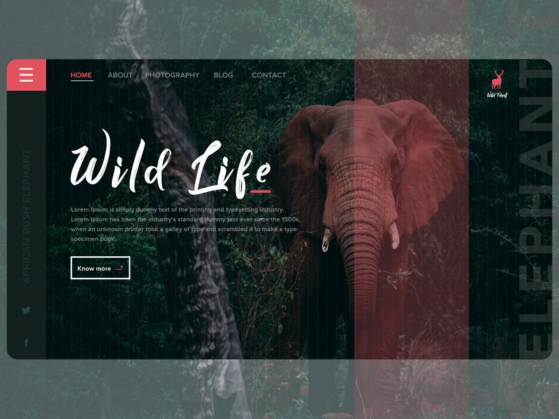 Wild Life Banner ui web dailyui dribbble design
