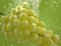 Apenta Grape Tv Spot