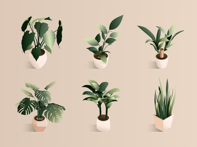 Isometric plant set in modern pot.