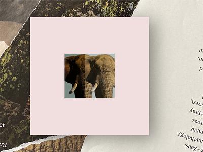 Elephant jentl layout illustrator art photoshop art artwork electronic music music collage collage art album art