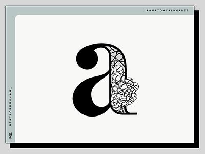 A is for Alveoli designer anatomyalphabet illustrator lettering anatomy illustration typographydesign typography 36daysoftype07 36daysoftype