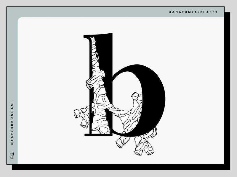An Anatomy Alphabet: B is for bronchus. design lettering typographydesign typography illustration illustrator designer anatomyalphabet anatomy 36daysoftype07 36daysoftype