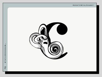 An Anatomy Alphabet: C is for Cochlea typography design typography designers illustrator illustration designer anatomy alphabet anatomy lettering 36daysoftype07 36daysoftype