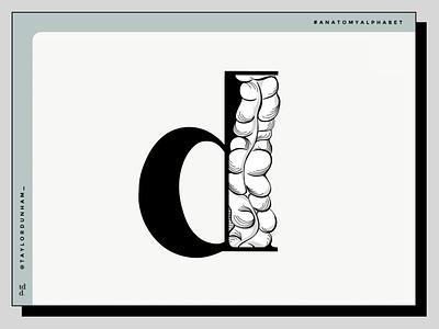 An Anatomy Alphabet: D is for descending colon. 36daysoftype07 36daysoftype type lettering anatomy alphabet anatomy illustration illustrator designer design typography design typography