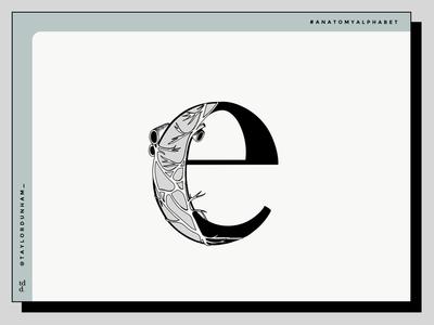 An Anatomy Alphabet: E is for esophageal plexus. typography design typography type lettering illustrator illustration designer design anatomy alphabet anatomy 36 days of type 36daysoftype