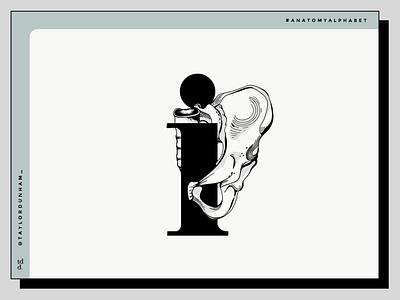 An anatomy alphabet: I is for illium. lettering anatomy alphabet 36 days of type 36daysoftype graphicdesign typography type vector illustrator anatomy design illustration