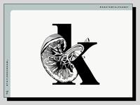 An anatomy alphabet: K is for kidney.