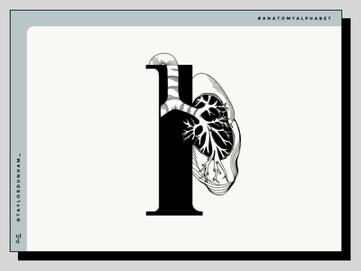 An anatomy alphabet: L is for lung lettering 36daysoftype07 anatomy alphabet 36daysoftype vector illustrations illustrator anatomy illustration design vector illustration illustration