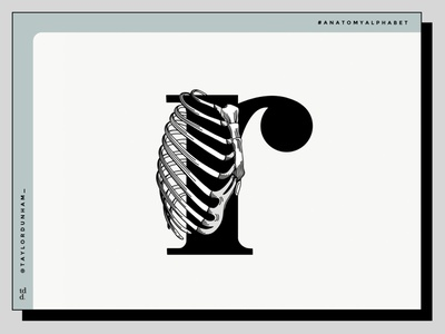 An anatomy alphabet: R is for rib cage. vector graphic design design 36daysoftype07 36daysoftype lettering art lettering anatomy illustrator illustration
