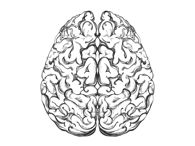 Brain Illustration vector illustration illustration vector vector art line drawing line art coloring page coloring book anatomy adobe illustrator adobe draw