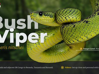 Study: Animals photo hero selections typography ux ui website web animals animal