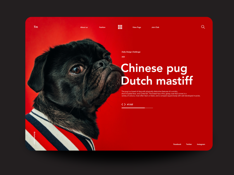 Chineese Pug dailyui daily 100 daily challange daily 100 challenge landing page ux ui  ux design ui