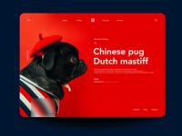 Chineese Pug2