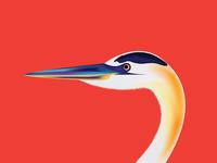 Birdillustration