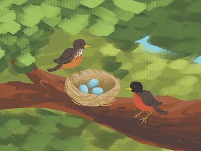 American Robins' Nest tree eggs nest bird robin wacom intuos photoshop digital art illustration
