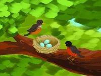 American Robins' Nest