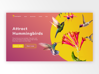 Hummingbird - Landing Page