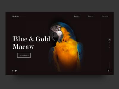 Macaw UI Concept