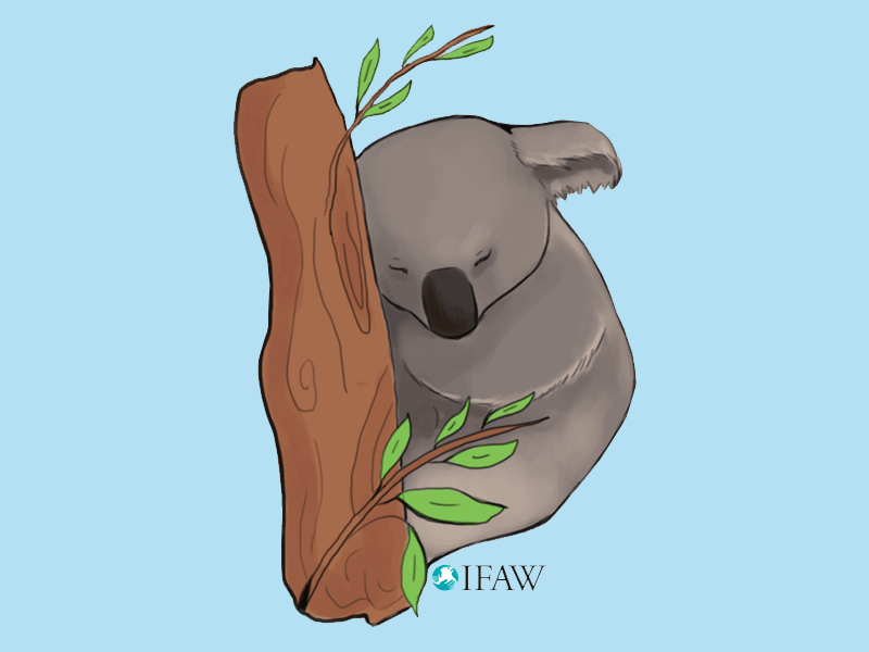 Koala social