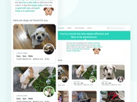 Pet Adoption Finder