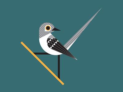 Northern Mockingbird mockingbird geometric lines texture pattern texas animal bird vector illustration logo