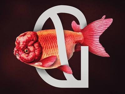 UMIDO meets a goldfish light sans serif sans-serif typeface red ugly nature goldfish ranchu goldfish g typography font
