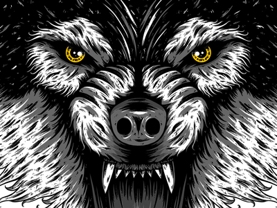 Wolf wolf dribbble design illustration
