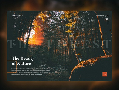 Forest - The Beauty of Nature
