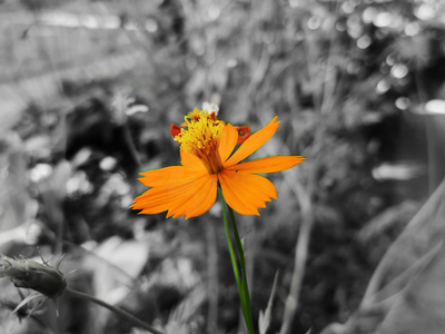 The beauty of flower