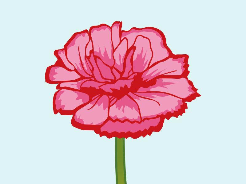 Carnation carnation slovenia spain carnationillustration vectorflower vectorillustration flowerillustration florals floristry flower illustration nationalflower