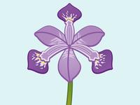 Iris Croatia