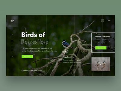 UI Design - Birds of Paradise Concept Page Video Animation illustrator sketch typography app ux photoshop vector designer illustration sanctuary design birds animated