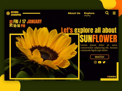 Sunflower with natgeo concept
