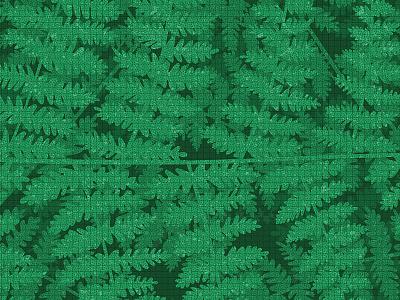 Fiordland Ferns ferns vector illustration