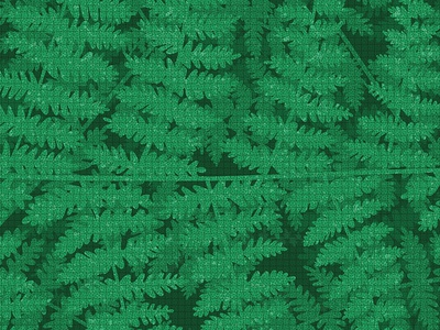 Fiordland Ferns ferns vector illustration