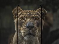 Mobile UI Design - Kruger National Park