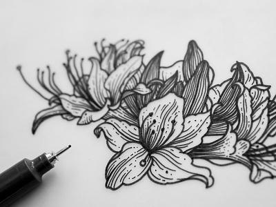 Azalea Flowers Illustration flowers penandink illustration drawing ink inkdrawing