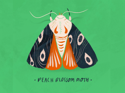Peach Blossom Moth gardening greenery color stamp green nature procreate botanical illustration botanical garden bug insect moth