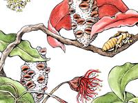 Banksia Seeds + Cicada Skins