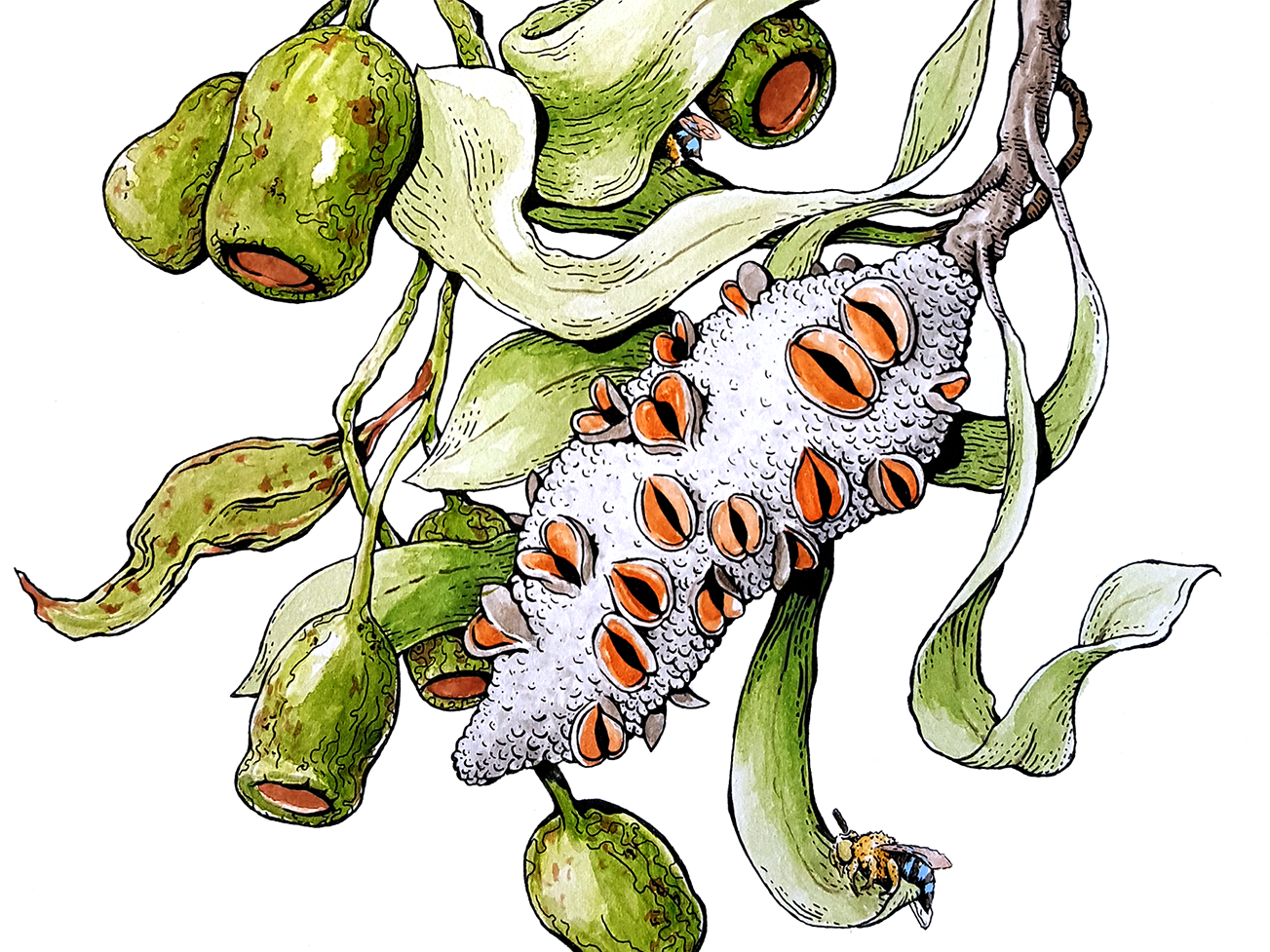 Blue Banded Bee Band natural plants leaves banksia story telling editorial illustration book illustration blue banded bee bee botanical illustration botanical artist nature gouache artwork watercolor australia drawing illustrator illustration