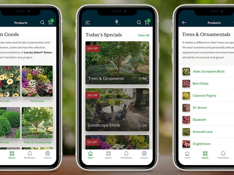 Lurvey App Design