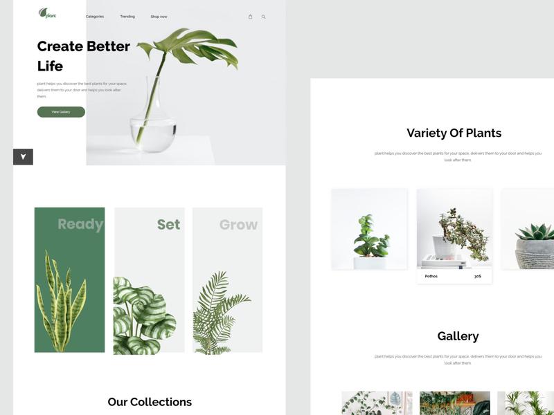 Plant Website Design webdesign plant uidesign uiux adobe xd