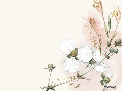White flower on a beige background vector template