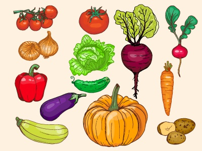 Vegetables cabbage onion cherry tomato beets cucumber tomato pepper set vector food vegetable