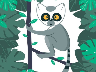 Lemur in the Forest