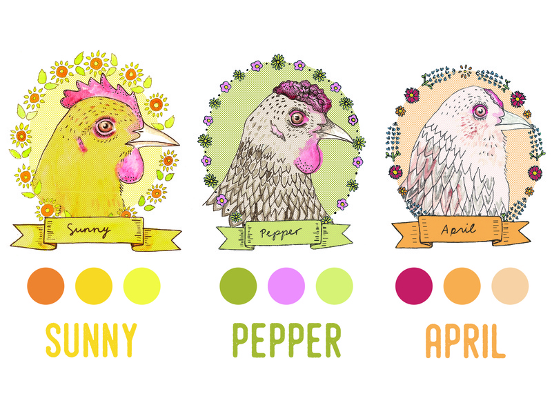 Cackleyard Farms eggs chicken design illustration