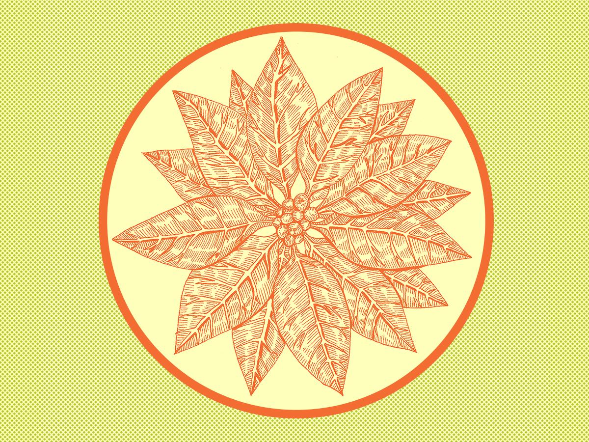 Poinsettia 120118 V2 pen holidays poinsettia photoshop micron design illustration