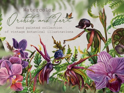 Watercolor Vintage Botany